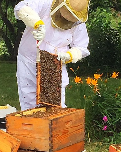 Trish working with the bees